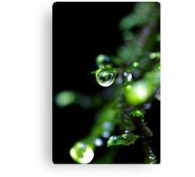"""""""Dew Drop"""" Canvas Print"""