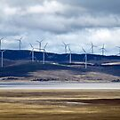 Wind Farm on Lake George, Canberra by Belinda Doyle