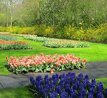 Colourful Beds of Hyacinths and Tulips - Keukenhof Gardens by Kathryn Jones