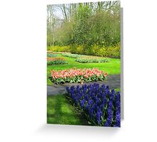 Colourful Beds of Hyacinths and Tulips - Keukenhof Gardens Greeting Card