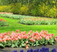 Colourful Beds of Hyacinths and Tulips - Keukenhof Gardens Sticker