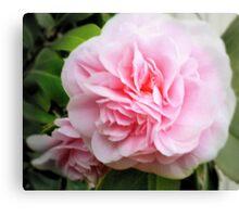 Pink Camelia - Garden Beauty Canvas Print