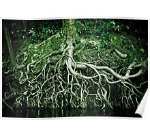 Exposed roots Poster