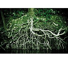 Exposed roots Photographic Print