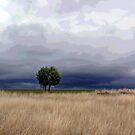 Near Coonabaraban by Elizabeth McPhee