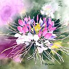 Cleome Blossom Watercolor by Pat Yager