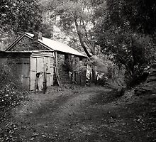 Miners Cottage, Walhalla  by Christine Wilson