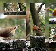 Robin red breast by Merice  Ewart-Marshall - LFA