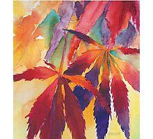 Splash of Autumn Color! Photographic Print