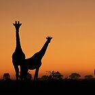 Giraffe Silhouette - African Wildlife Background - Grace and Elegance by LivingWild
