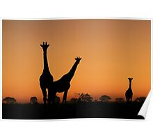 Giraffe Silhouette - African Wildlife Background - Grace and Elegance Poster