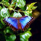 Beautiful butterfly..... by DaveHrusecky