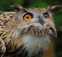European Eagle Owl by Alexa Pereira