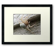 """Come Closer!!""  Said The Spider To The Fly... Framed Print"