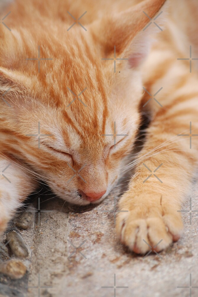 Cat in Crete 3 by SweetLemon