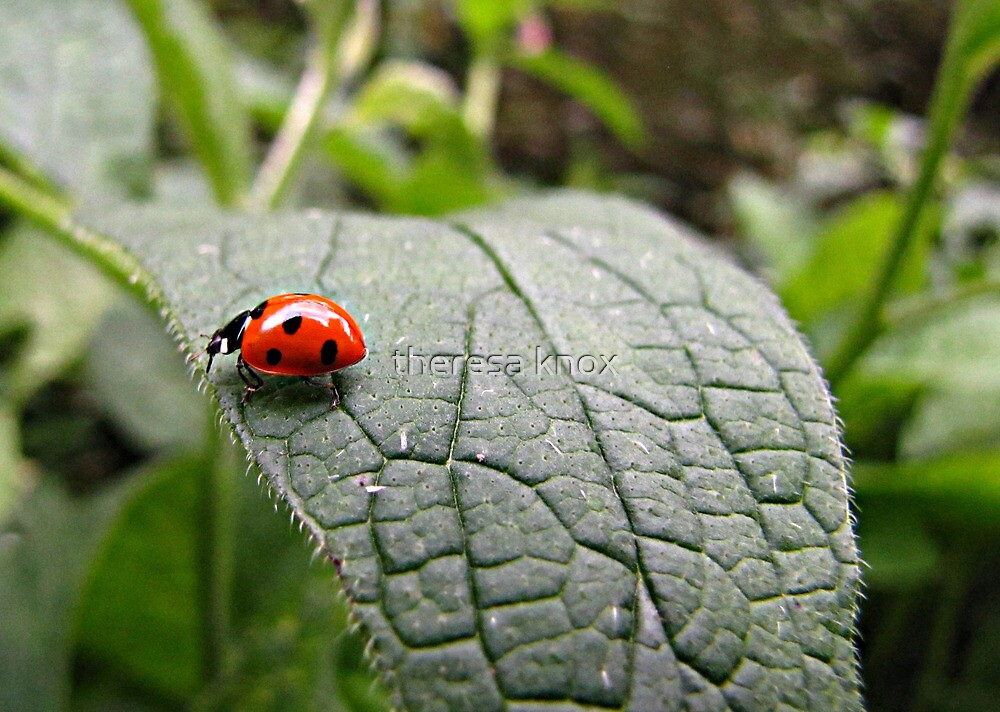 Ladybird out for a stroll by theresa knox