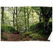 Woodland glade Poster