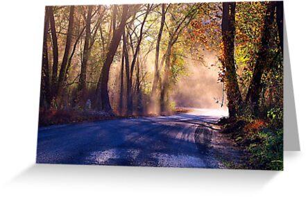 Deep Autumn Sun  by NatureGreeting Cards ©ccwri