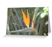 Strelitzia - Crane Flower Greeting Card