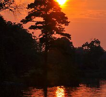 Sun Silhouette by Gayle Dolinger