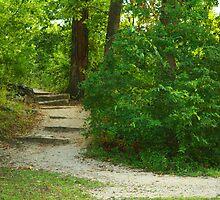 Trail Walk by Susan Blevins
