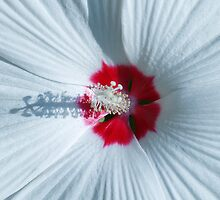Up Close and Personal (hollyhock) by nastruck