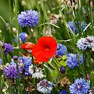 Flowers at Woodstock Gardens by Martina Fagan