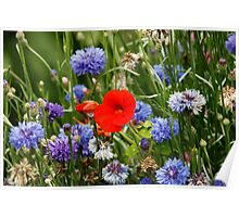 Flowers at Woodstock Gardens Poster