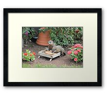 World's Largest Squirrels Framed Print