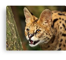Serval Portrait Canvas Print