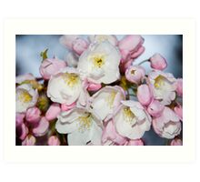 Pink Japanese Tree Flowers Art Print