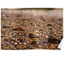 Macro of shells Poster