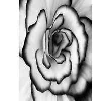 Beauty can still be found even without color!!! ©  Photographic Print