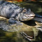 Double Vision (Alligator) by Lin Taylor