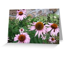 Radford Cone Flowers Greeting Card