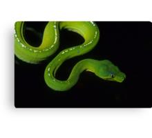 Green Python Canvas Print
