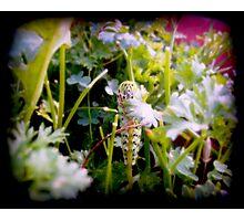 The Swallowtail Caterpillar Photographic Print