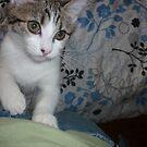 Dex Machine (Crotch Cat) by Matt Roberts