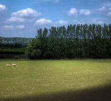 Two Sheep Grazing - Oxfordshire, United Kingdom by Mark Richards