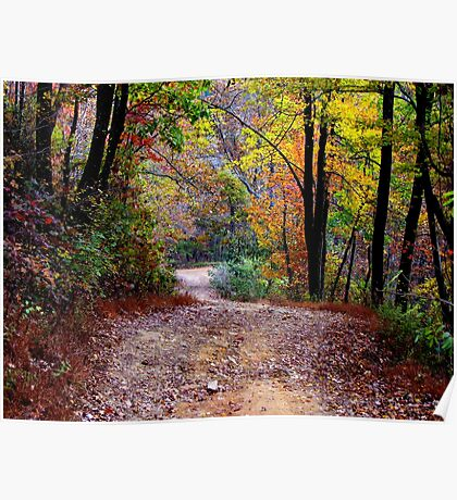 Autumn Colors Deep Within The Wilderness Country Road Poster