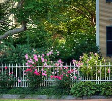 Rose Garden in Newburyport by Monica M. Scanlan