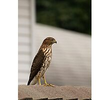 Rooftop Perch Photographic Print