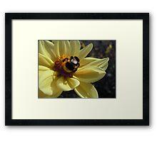 Mr Bumblebee's Flower Framed Print