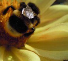 Mr Bumblebee's Flower Sticker