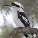 Huxtable Park Chermside West Queensland by aussieazsx