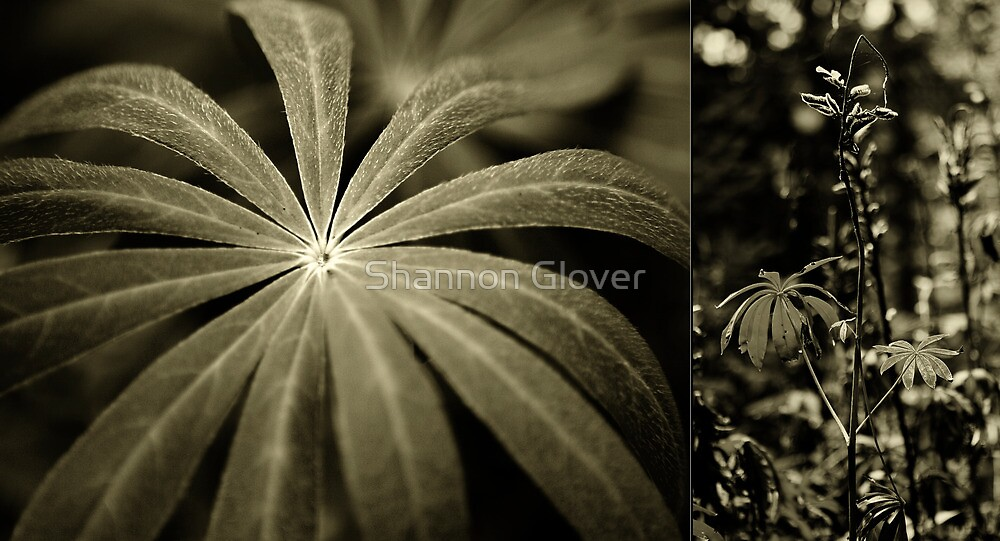 Nature by Shannon Holm