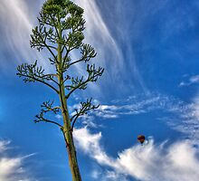 Reaching for the Sky by Sue  Cullumber