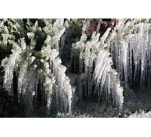 Sprinklers and Freezing Temps Photographic Print