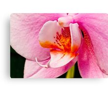 Pink Orchid Macro Canvas Print