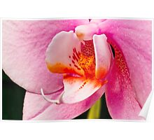 Pink Orchid Macro Poster